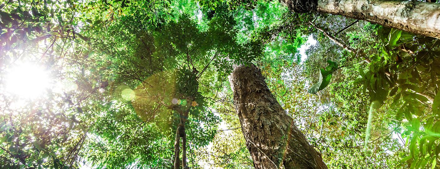 Floresta Amazônica, em Manaus
