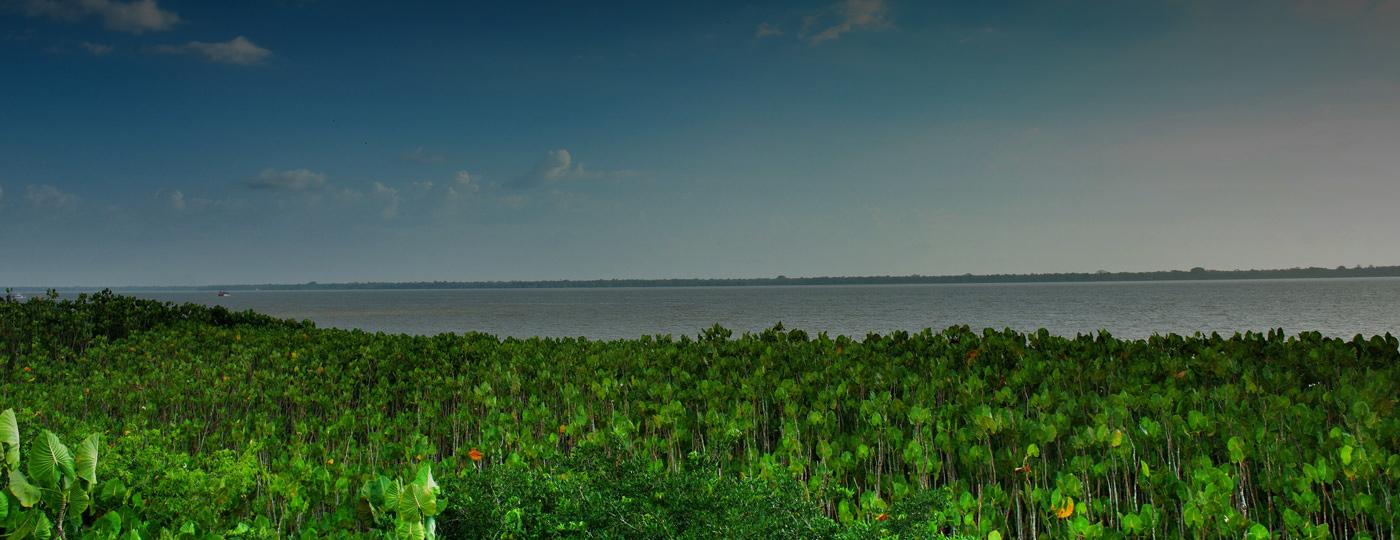 Vegetação típica de Belém do Pará com vista para o rio
